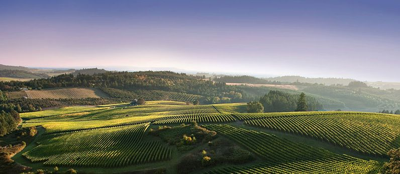 Oregon's Sleepy Wine Country is Waking Up