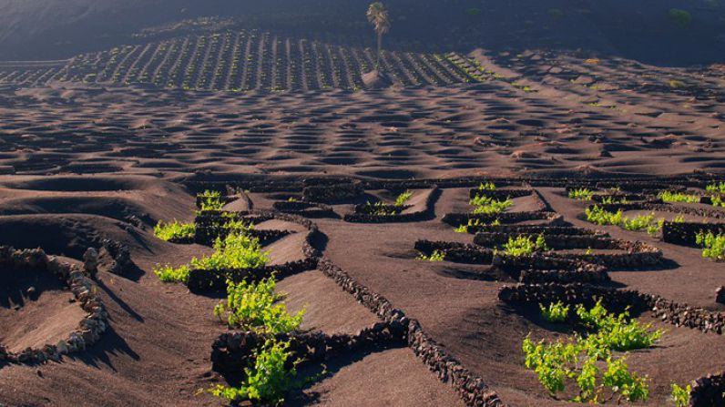 The Canarian Malvasia, a legend reborn