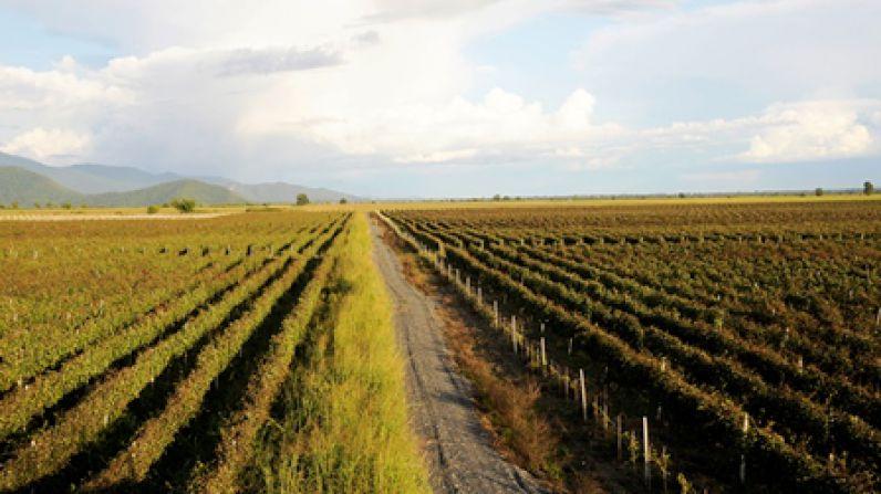 Georgia, amphoras and white wine
