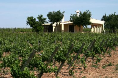 Vineyards at Bodegas Martúe