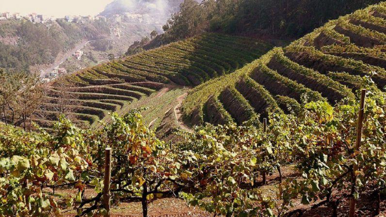 Vinos de Madeira: un vino de gran lujo para Navidad
