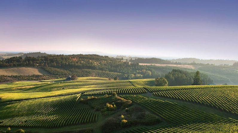 El despertar de los viñedos de Oregon