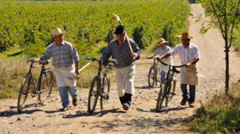 Vinos de Chile. Cruzando la cordillera