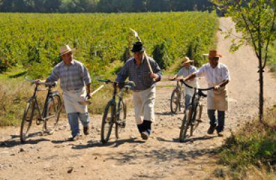 Bicicletas entre viñedos en Santa Digna, Bodegas Torres
