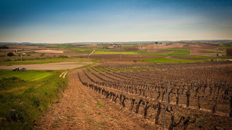 """Ribera del Duero, destino elegido por """"The New York Times"""" para visitar en 2018"""