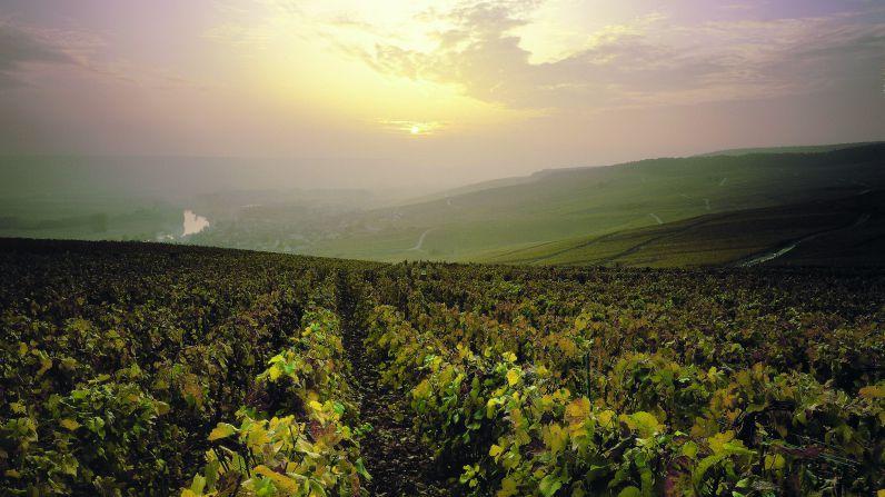 Enoturismo en La Champagne (capítulo III)