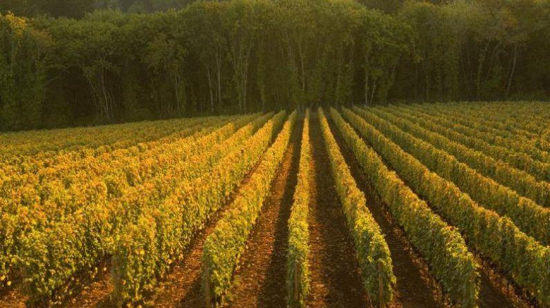 Ayoub Vineyard, Behind Winery