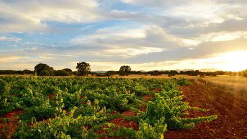 Una empresa californiana certifica que el viñedo de Fuentes del Silencio es uno de los más excepcionales de España, Italia y Estados Unidos.