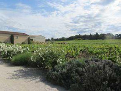 Vista de los viñedos de Clos des Papes