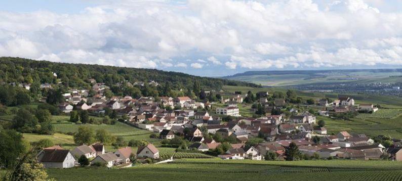 En la ruta de la Côtes des Blancs
