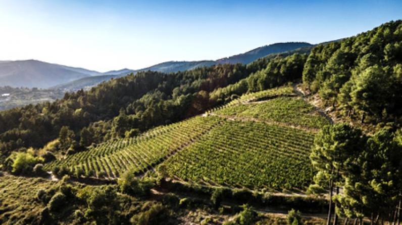 Celebra la llegada del verano con la pureza de la godello de los vinos blancos de O Luar do Sil.