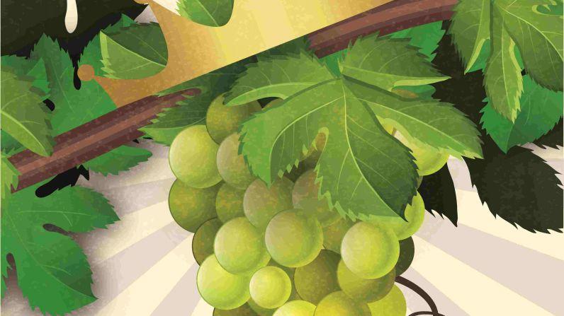 La D.O. Navarra reivindica sus vinos blancos