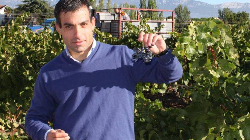 La vendimia de las uvas más saludables en Bodegas Riojanas