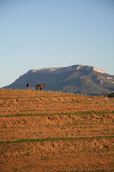 Viñedos de la bodega Mas d'en Gil con la montaña de La Mola al fondo.