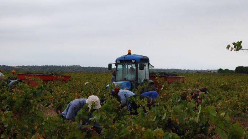 Castillo Perelada cierra una cosecha 2012 especialmente buena para los vinos tintos.