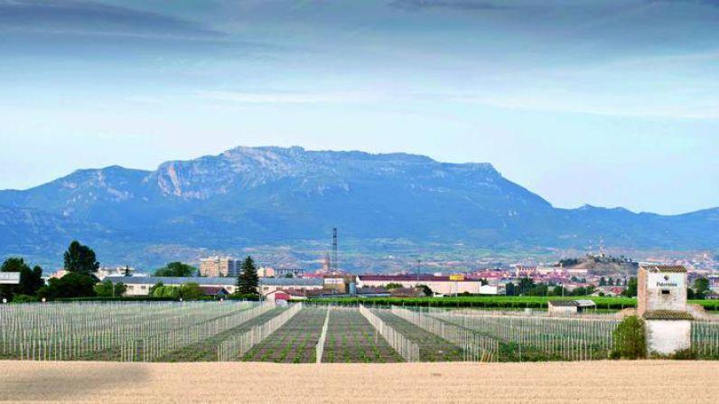 Bodegas Paternina invierte en la plantación de un nuevo viñedo en Haro.