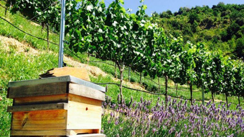 Andorra, país de vinos
