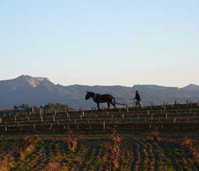 El proceso de arado se realiza con mulas