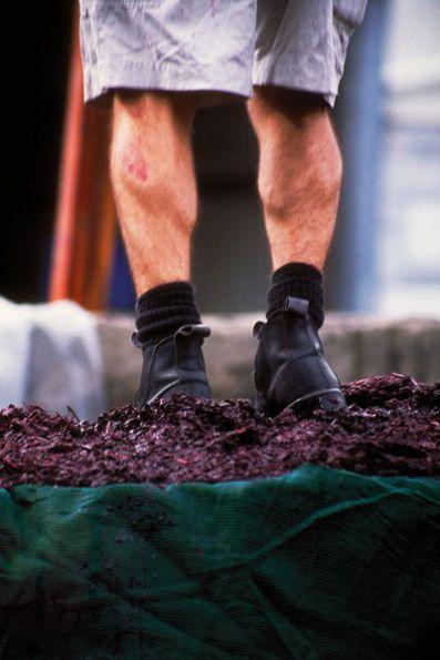 D'Arenberg - Compactando pulpa después de la fermentación y antes del prensado