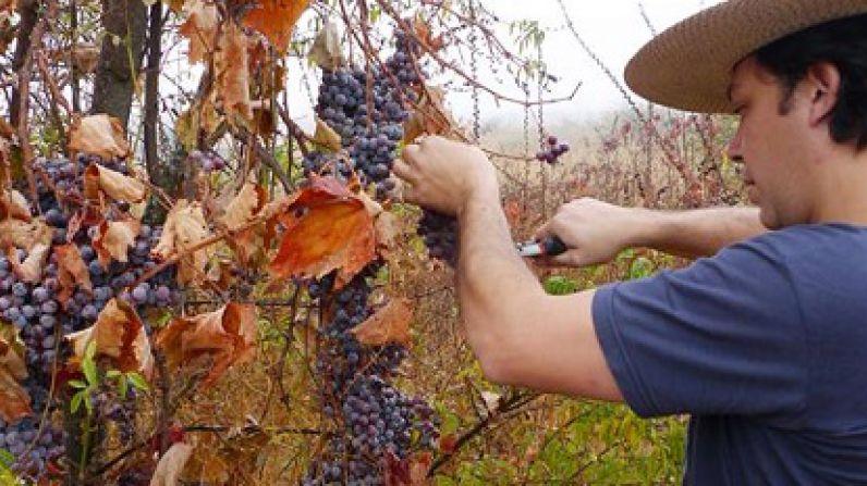 La hora de los vinos naturales
