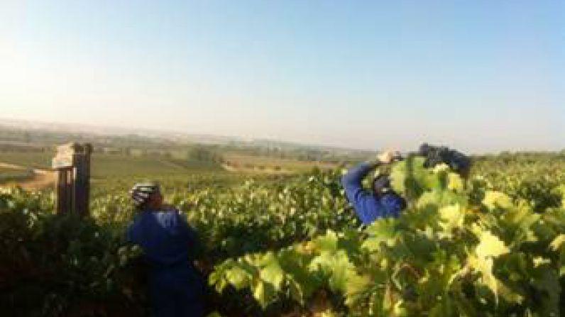 Generación de empleo en la Ruta del Vino Ribera del Duero