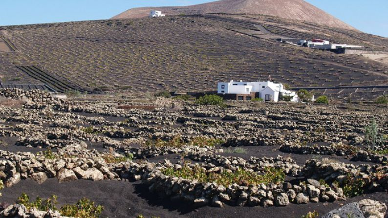 Viñedos en La Geria, Lanzarote